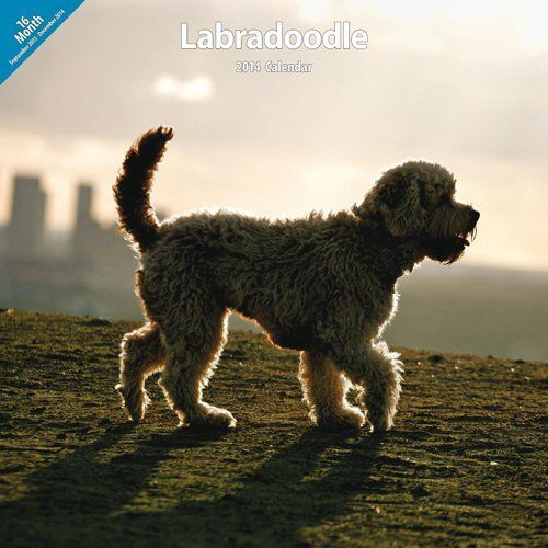Labradoodle 2014 Wall Calendar >>> Details can be found by clicking on the image.