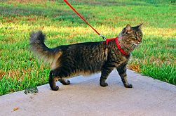 I saw a cat hiking in the mountains on a leash yesterday.  Davy, you're next.