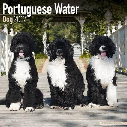 Avonside Hunde-Kalender 2017Avonside Hunde Wandkalender 2017: Portuguese Waterdog - Portugiesischer Wasserhund
