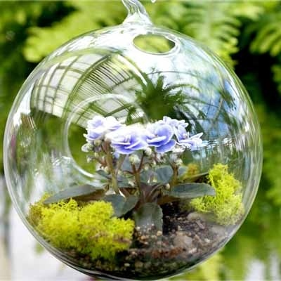 These pretty little African violet terrariums come planted with miniature plants that love the warm and steamy environment of a glass globe.