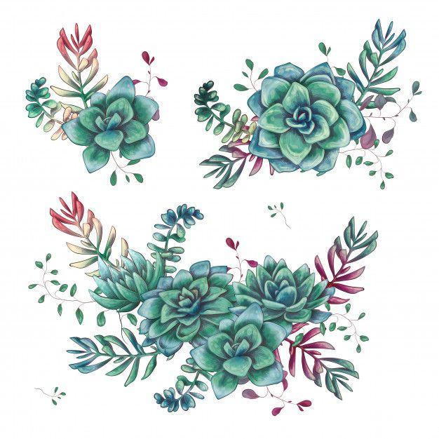 Conjunto De Composicoes Florais Suculentas Na Mao Desenhar Estilo