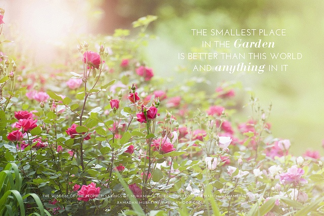 (Ramadan Desktop ~ Garden)  Share these inspirational greetings with your family, friends and colleagues.  www.abudawoodglobal.com