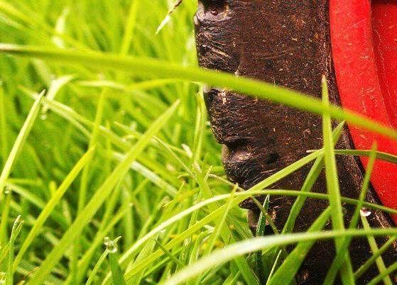 Darf man am Karsamstag den Rasen mähen?