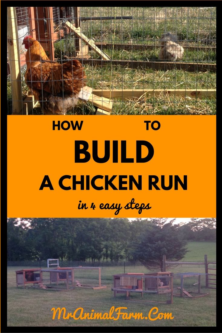 1091 best backyard chicken project images on pinterest raising