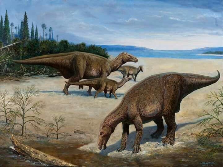 *Iguanodon. Art by Petr Modlitba