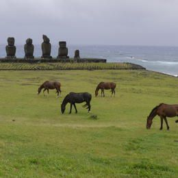 ©OUR PLACE / Chris Morton - Chile - Easter Island province of the Valparaíso Region - Rapa Nui National Park