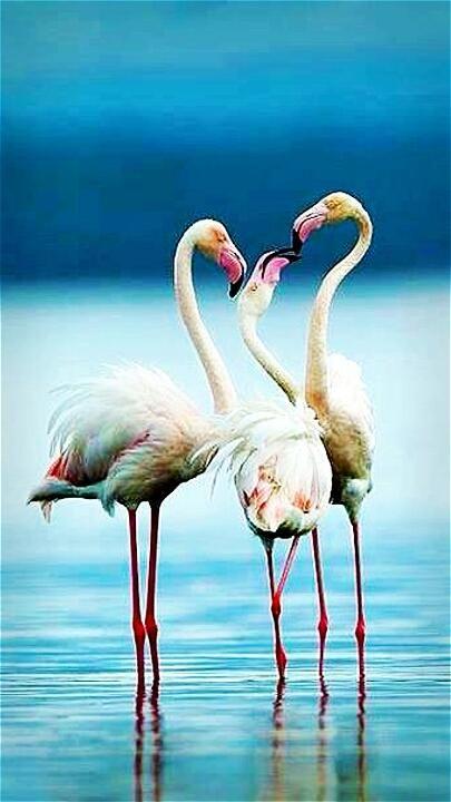flamingo #birdandknoll