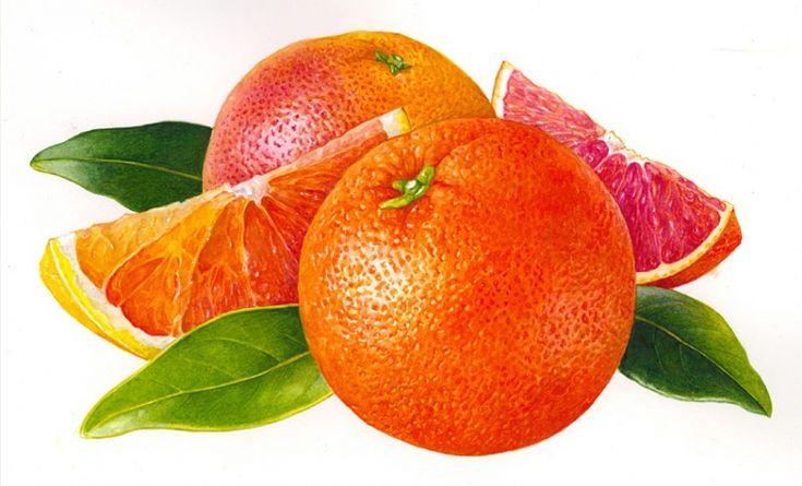 Red Oranges,Rosie Sanders