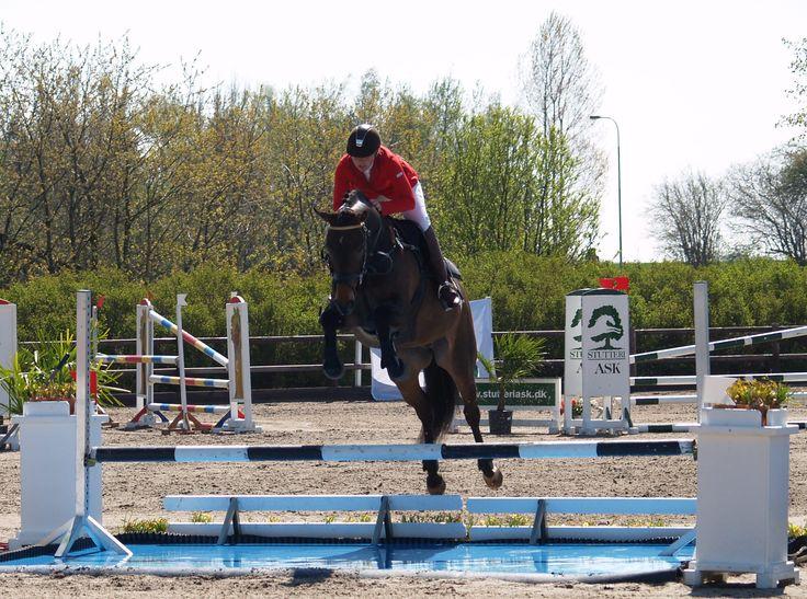 Casino - MB* - Glamsbjerg Holfelt Horses Stutteri - Casino under konkurrence.   Her kan du se Casino springe   #Springhest #ridning #heste #hesteridning