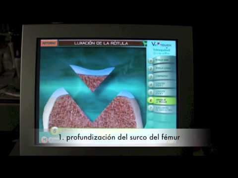 Traumatologia animal | Hospital Veterinario El Bosque | Madrid