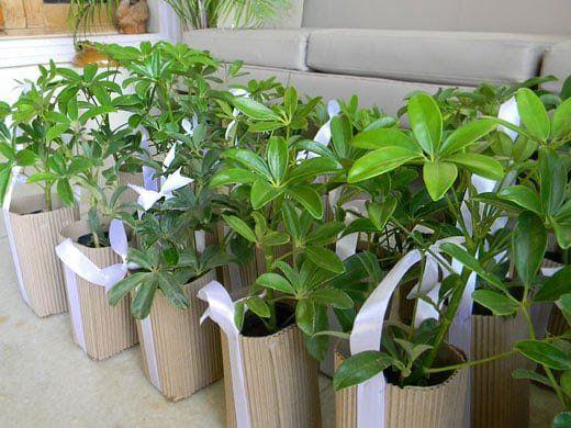Piante e fiori sono tra i regali e gli omaggi più diffusi, anche perché generalmente graditi a tutti. #Piante-grasse, #piante-verdi, fiori colorati, rose rosse...c'è solo l'imbarazzo della scelta! Qualunque sia l'opzione, questo #packaging risulterà perfetto...