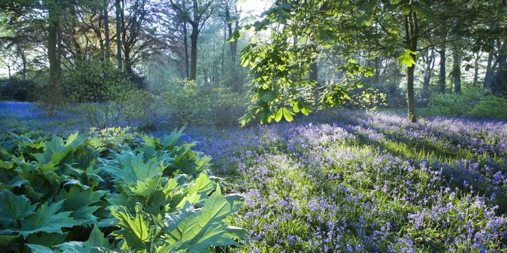 10 photos of bluebells flooding the countryside  - countryliving.co.uk