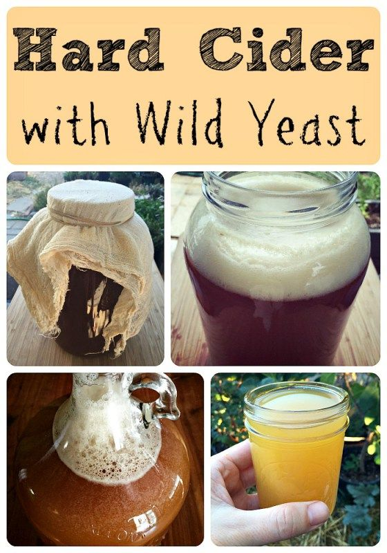 how-to-make-hard-cider-with-wild-yeast