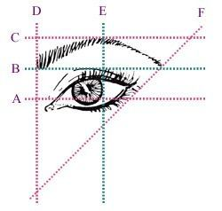 The start of your eyebrow should be vertically in line with your eye etc.