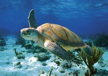 I want to swim with the turtles in Hawaii.