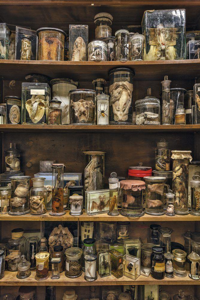 museum of curiosities