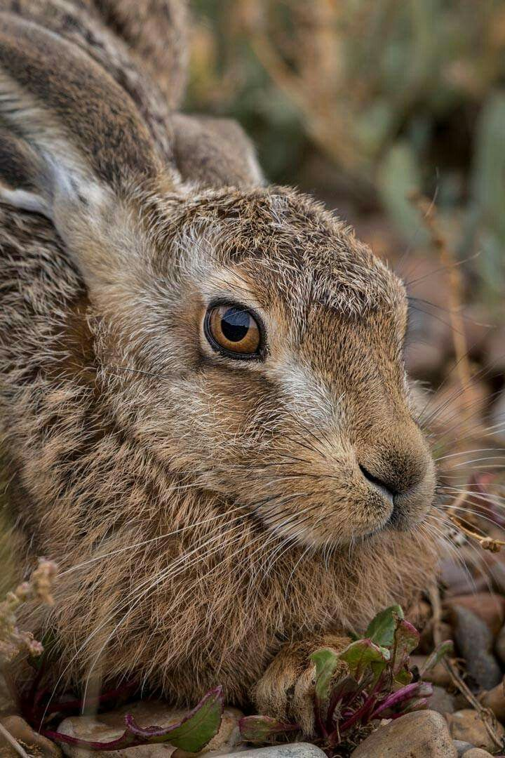 THIS BEAUTY MUST BE THE HARE OF THE DOG. L.