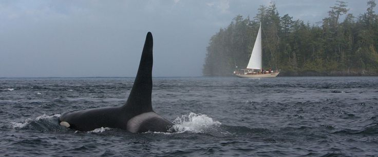 Sailing with the whales - Seasmoke Whale Watching - Alert Bay, Vancouver Island, Canada