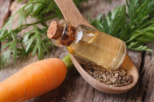 Carrot Seed Oil, Not Just An Aroma - https://leafmother.com/blog/carrot-seed-oil-not-just-an-aroma/