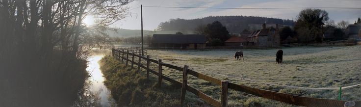 A frosty morning #winter #frost #country #horses