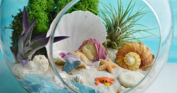 "Mermaid Beach Terrarium Kit ~ 2 AirPlants ~ Beach Decor ~ Shells ~ Sleeping Mermaid in Shell ~ 7"" Glass Terrarium ~ Gift Idea ~ Terrariums 