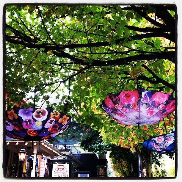 umbrellas in trees