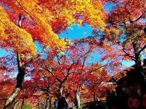 秋の箱根の紅葉 Autumn Leaves in Hakone 箱根観光 長安寺、芦ノ湖、登山電車、箱根美術館 紅葉便り 日本の紅葉 Disco...