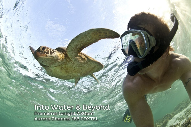 Dive beneath the surface to see all Australia has to offer from a  different angle. #tv #water #turtle #snorkel #underwater