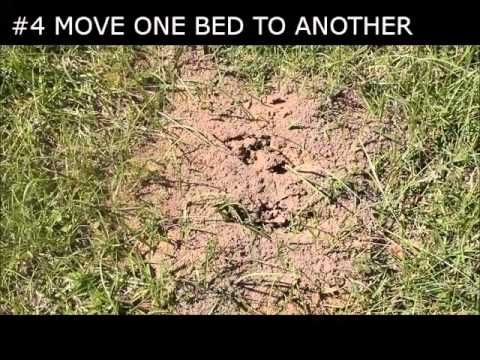 How to get rid of ant beds and treat ant bites naturally - A Mother Far from Home