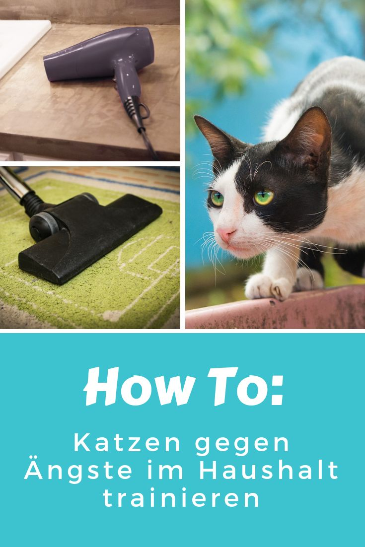 Cat training against fears: That's how it works!