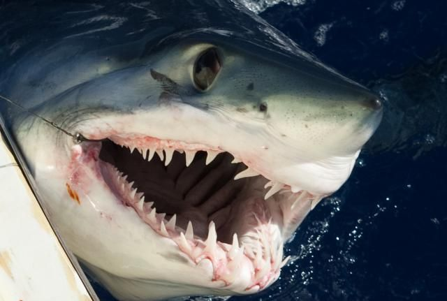 A perfect island paradise that we can no longer surf.: Sharks in Reunion.