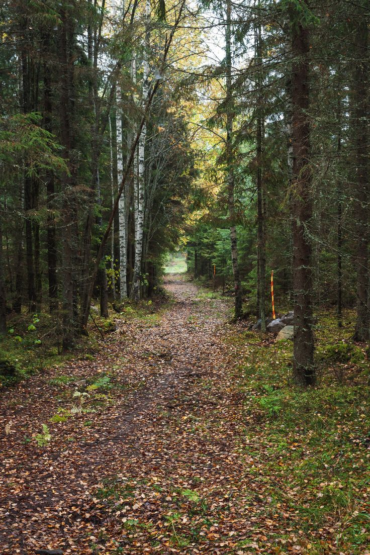 https://flic.kr/s/aHskxZespk | Aulanko, Hämeenlinna, Finland | Aulanko has been a popular destination with visitors for more than a hundred years. Nowadays, there is a lot to see in Aulanko Nature Reserve, in addition to the beautiful scenery. The forest park of Aulanko, its sights, and the view from the scenic lookout tower of Aulangonvuori Hill over the national landscape attract more than 400 000 visitors every year. The area is best suitable for day trips.