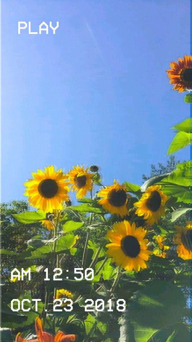 Aesthetic Flowers Vhs Effect Vcr Sunflower Wallpaper Photography Wallpaper Aesthetic Wallpapers