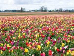 3Exit Tulip Garden - Jammu Links - Khirbhawani's E-Forum::A-Z News::Clinical Trials::Jobs::Cheap Air Tickets