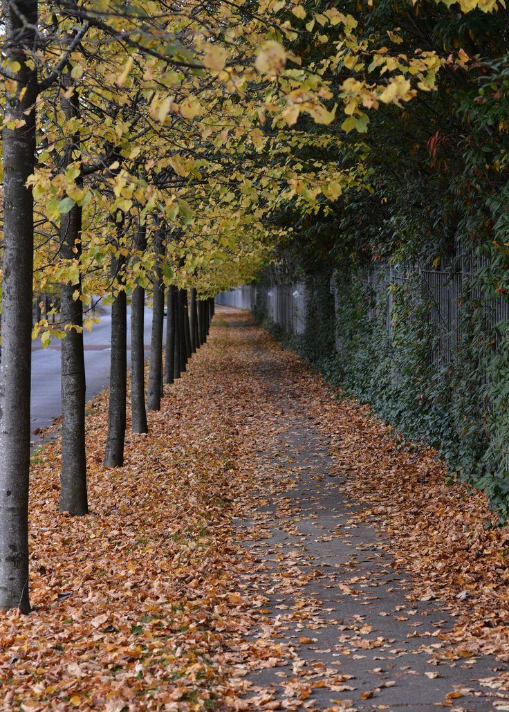 Autumn in Kidare Ireland