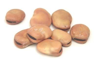 Fava Beans... My pa mixes these with vinegar, olive oil and fresh herbs and we nibble while we drink
