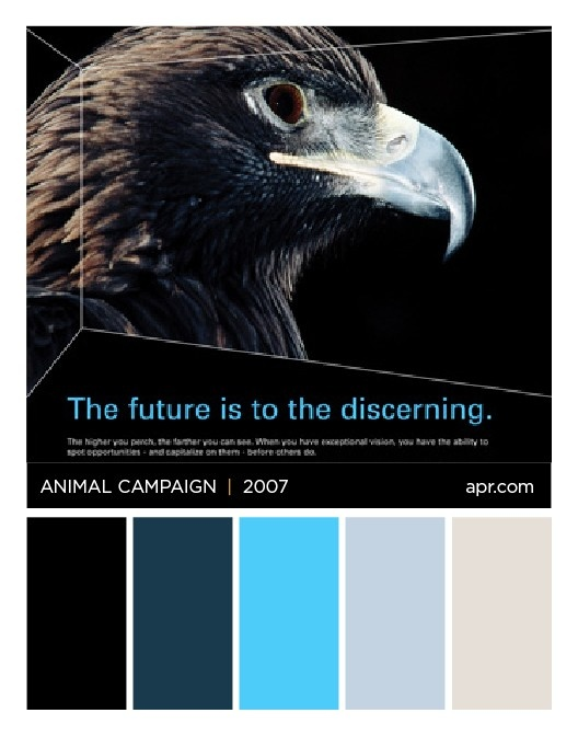 Animal Campaign Eagle color palette. #fierce