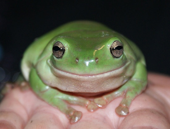 Smile #frog, #green, #smile