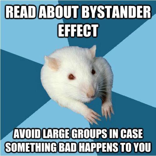 Psychology rat!
