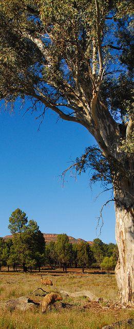 Flinders Ranges by jaysea007, via Flickr