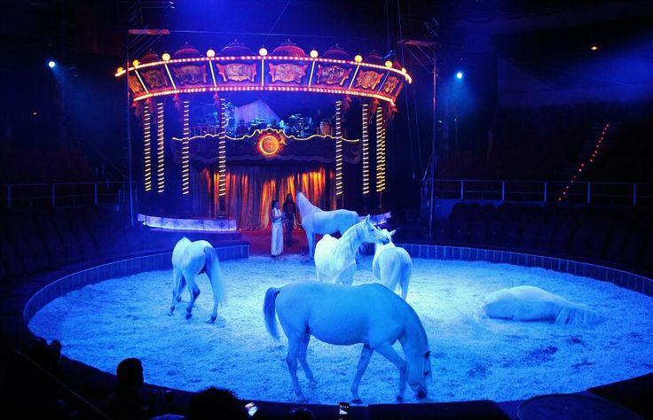 Navidad en Circo Price 2014 en Madrid