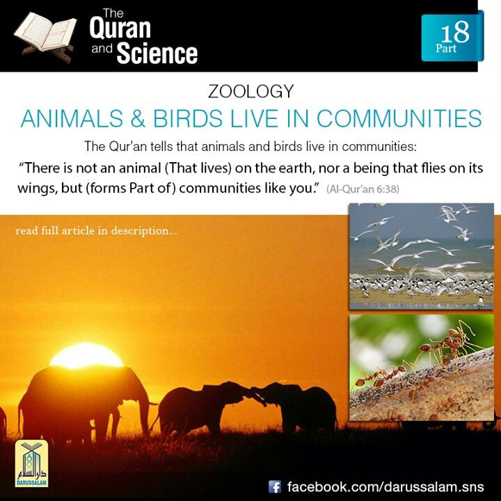 "Qur'an and Science: 18. Animals & Birds Live in Communities: ""There is not an animal (That lives) on the earth, Nor a being that flies On its wings, but (forms Part of) communities like you."" [Al-Qur'an 6:38]Research has shown that animals and birds live in communities, i.e. they organize, and live and work together.(from ""The Quran and Modern Science, Compatible or Incompatible?"" by ""Dr. Zakir Abdul Karim Naik"" published by Darussalam)"