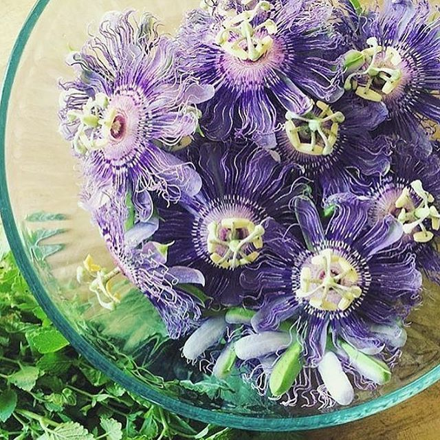 Pin By The Punk Rock Herbalist On Herbs And Herbalism Loose Leaf Tea Vibrant Flower Passion Flower
