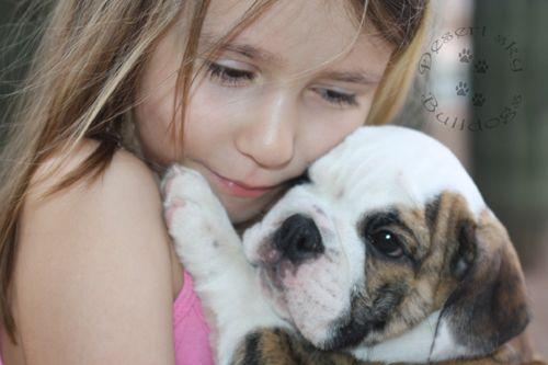 Tequila Availalble For Adoption English Bulldog Breeders Bulldog Puppies For Sale Bulldog Lover
