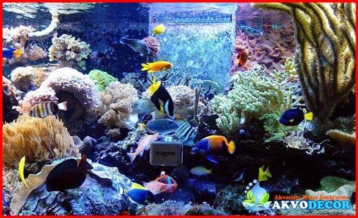 Tips Cara Membuat Akuarium Air Laut Untuk Pemula  Cara membuat akuarium air laut untuk pemula telah banyak bermunculan di berbagai situs – situs yang memuat tentang akuarium ini. Bagi yang memiliki uang sedikit atau pas – pasan maka mereka akan memilih untuk membuat sendiri akuarium tersebut.  Selengkapnya >> http://akvodecor.com/tips-cara-membuat-akuarium-air-laut-untuk-pemula/