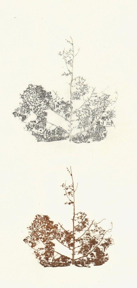 Casilda García Archilla, Compulsa vegetal (Los placeres del parecido) on ArtStack #casilda-garcia-archilla #art