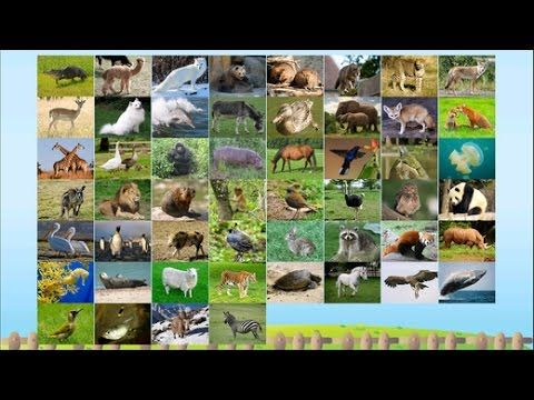 ABC Alphabet Animal Flashcard Write A to Z for Kids | Animals ABC Alphab...