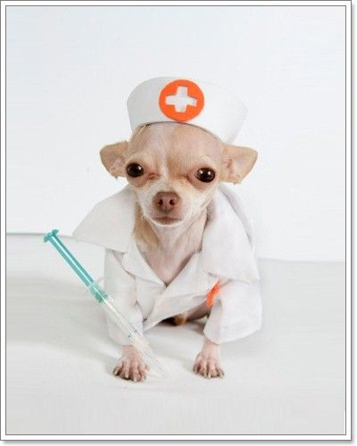 10 Household Medications Safe for Dogs : The Doggy Dojo
