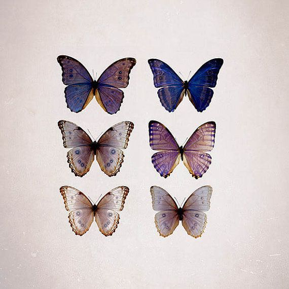 Butterfly Photography print- purple and beige modern wall decor, Blue Morpho, Radiant Orchid- pastel summer wall art op Etsy, 11,33€