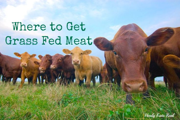 Grass fed and pasture raised meat is much better for you, but where do you buy it? Here's a quick guide to help you figure out where to get grass fed meat!